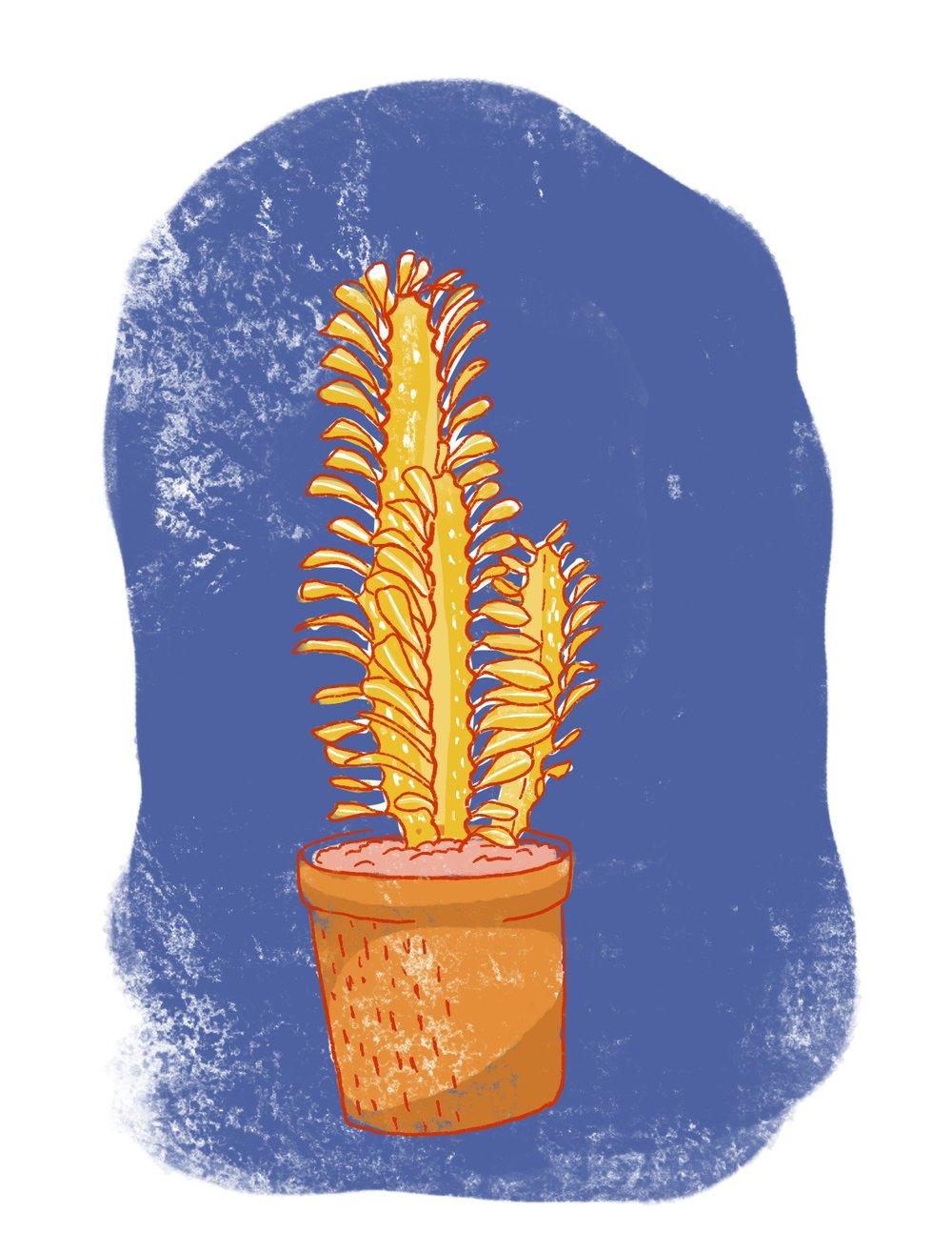 web.riso.plant1.jpg
