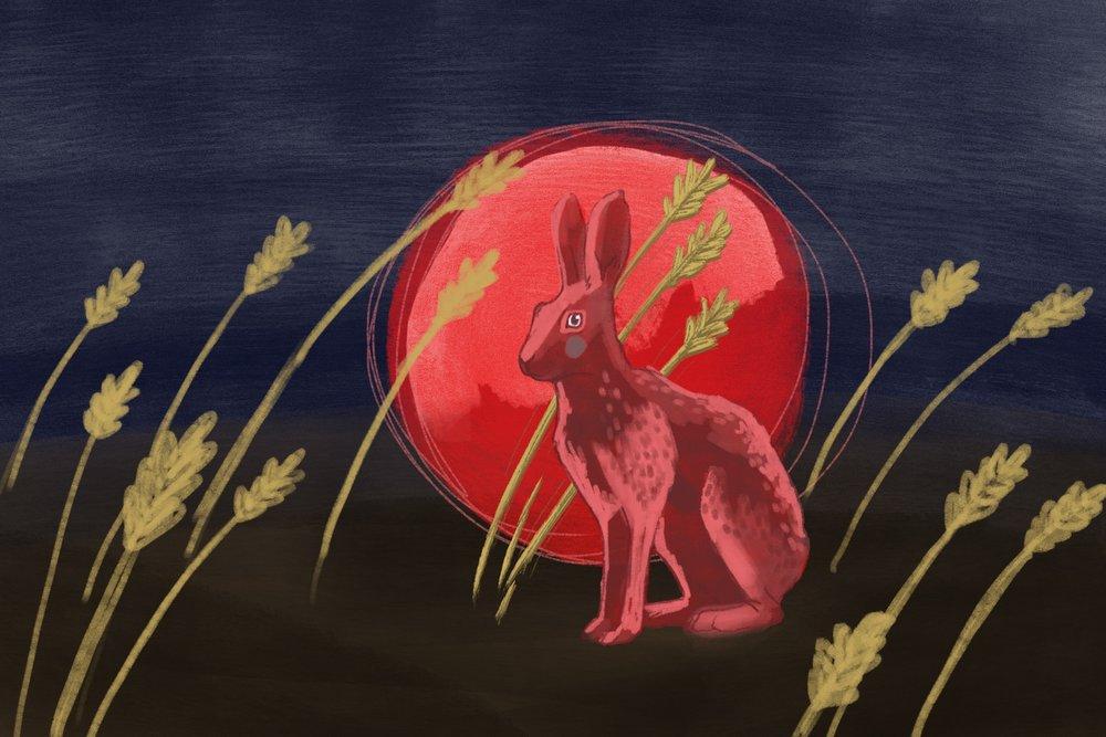 web.rabbit2.jpg