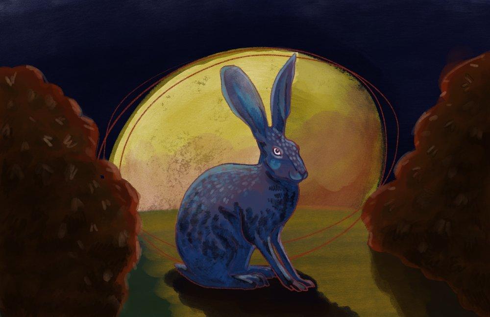 web.rabbit.1.jpg