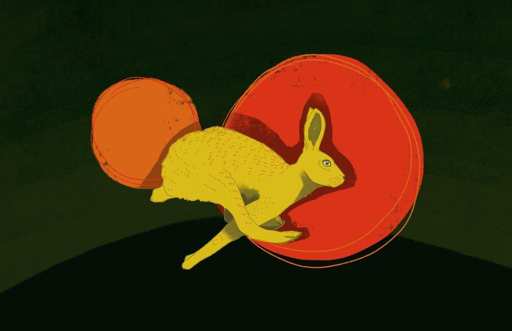 web.rabbit3.jpg