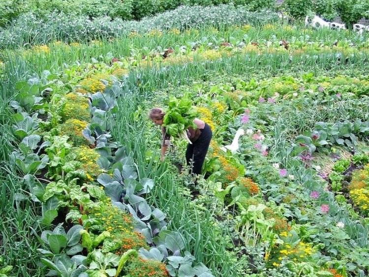 Beautiful_companion_row_planting-crop-1.jpg