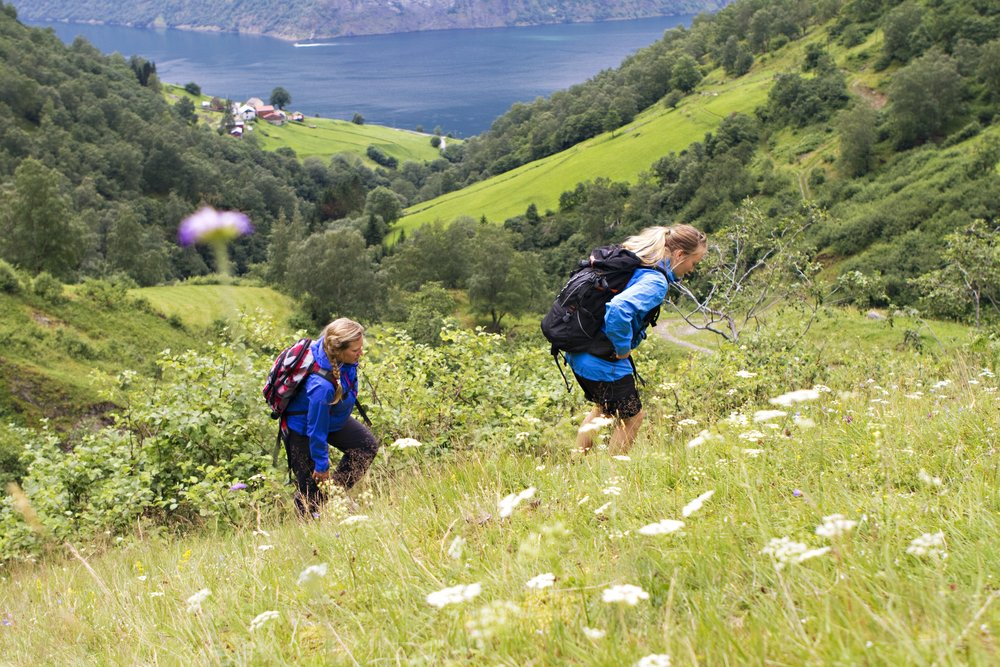 practical information - Time/period: 5,5 hour round trip (RIB boat + hike + lunch + car)June 15th. 2019 - August 31st. 2019 at 09:00-14:30.Meet: 20 minutes prior to departure in FjordSafari reception.Price: Adults NOK 1490,- / Children NOK 990,- incl. transportation, lunch and guide.