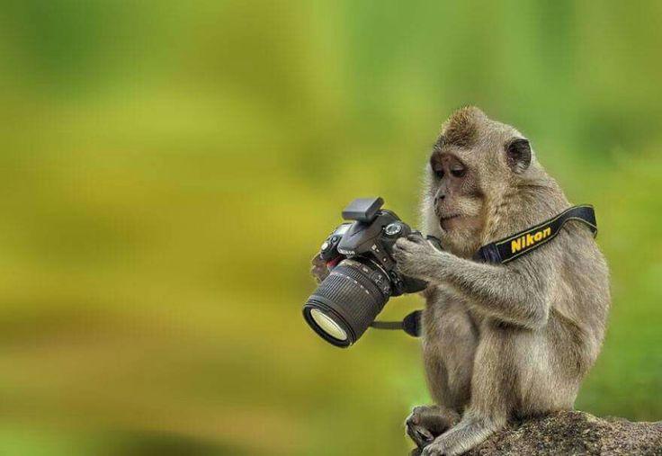 Curious Monkey.jpg