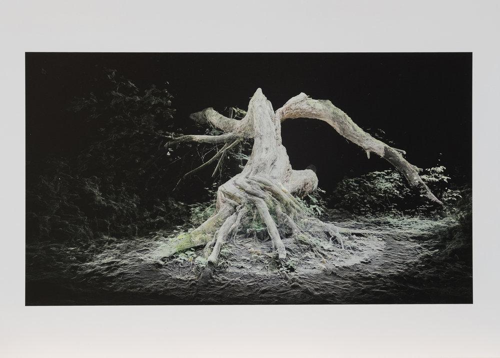Dark Fractures - Nature's Ruin 02 - Print