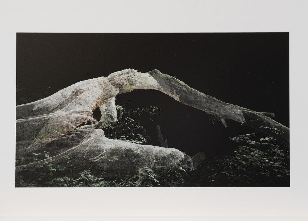 Dark Fractures - Nature's Ruin 03 - Print
