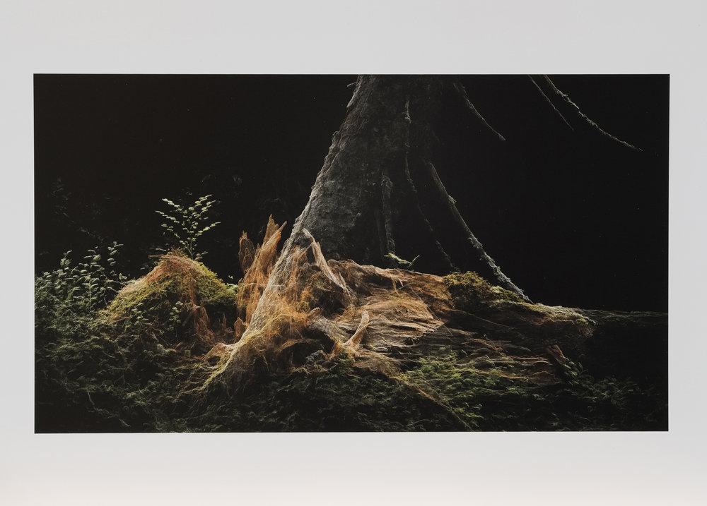 Dark Fractures - Nature's Ruin 06 - Print