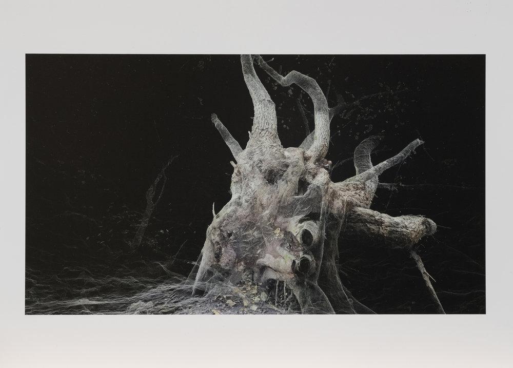 Dark Fractures - Nature's Ruin 07 - Print