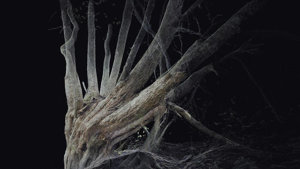 Dark Fractures - Nature's Ruin 09 - Digital