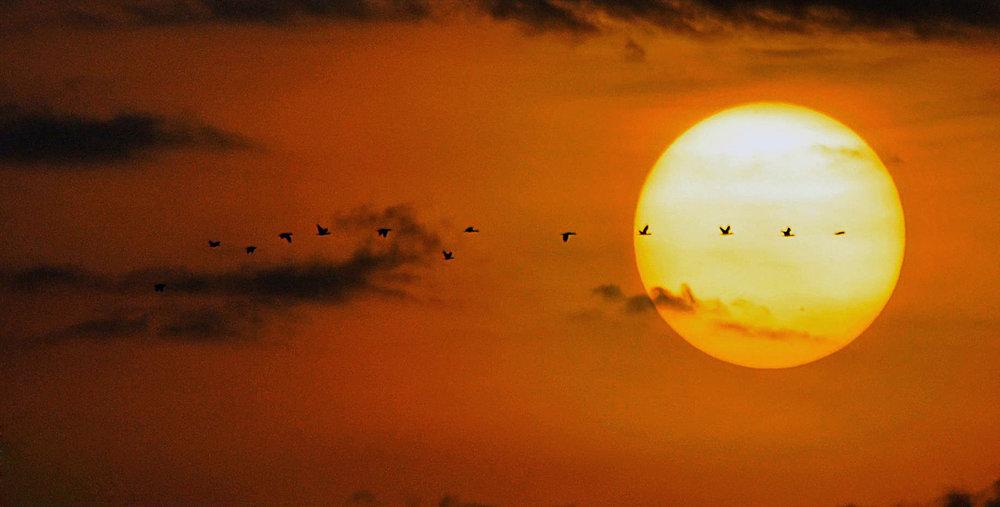 Sunset flyaway.jpg