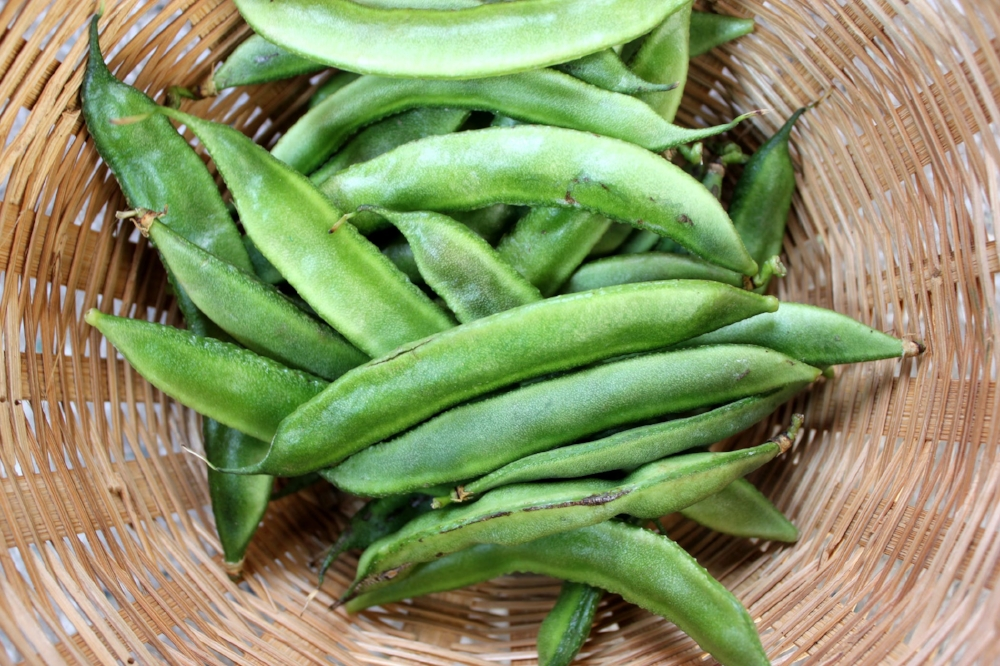 Guar gum pods. Image courtesy of: www.wagwalking.com.