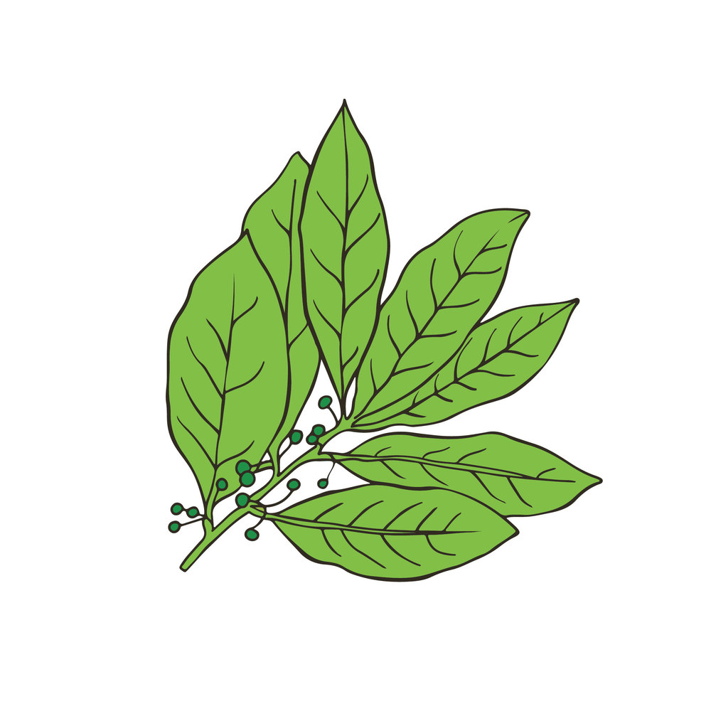 Reedlab illustration_bayleaf.jpg