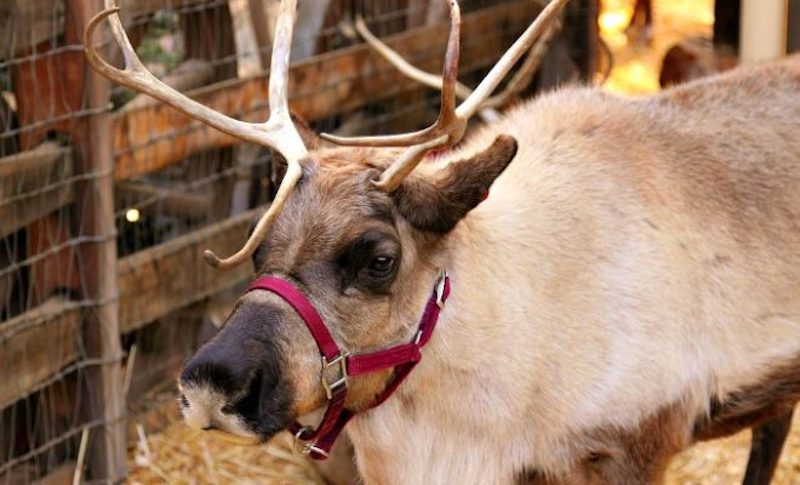 Reindeer-Ranch-660x400.jpg