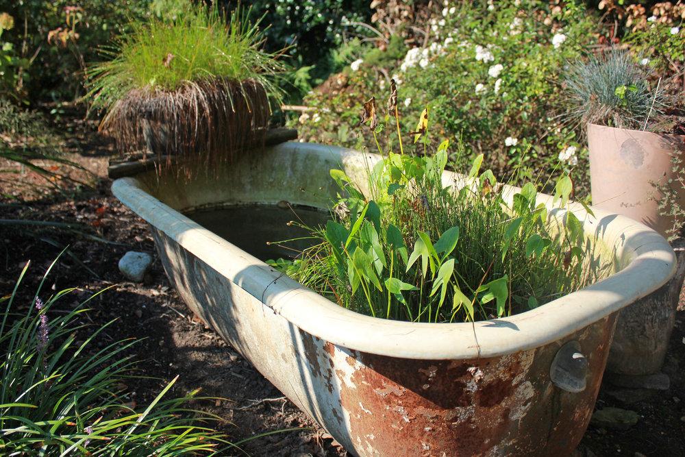 tub of plants.jpg