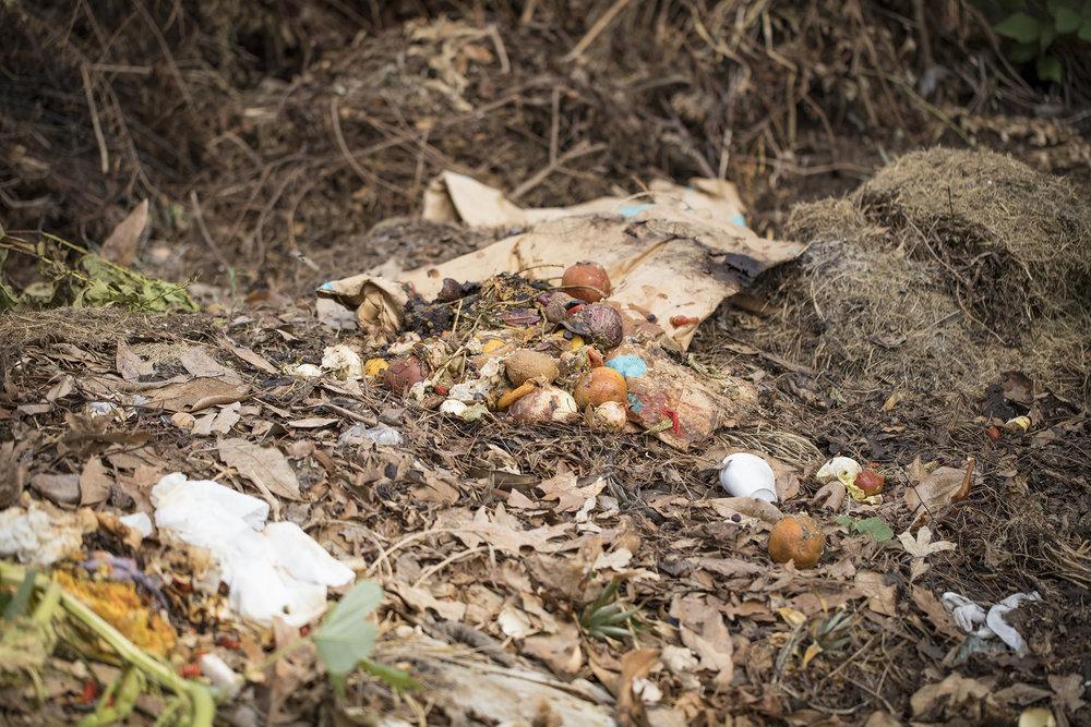 Compost Fairy_46A4728.jpg