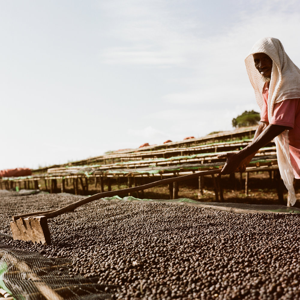 Ethiopia Mormora Natural - Located near the town of Shakiso in Guji, Mormora is a 200 hectre farm that brings a vibrant strawberry sweetness and coating milk chocolate mouthfeel.