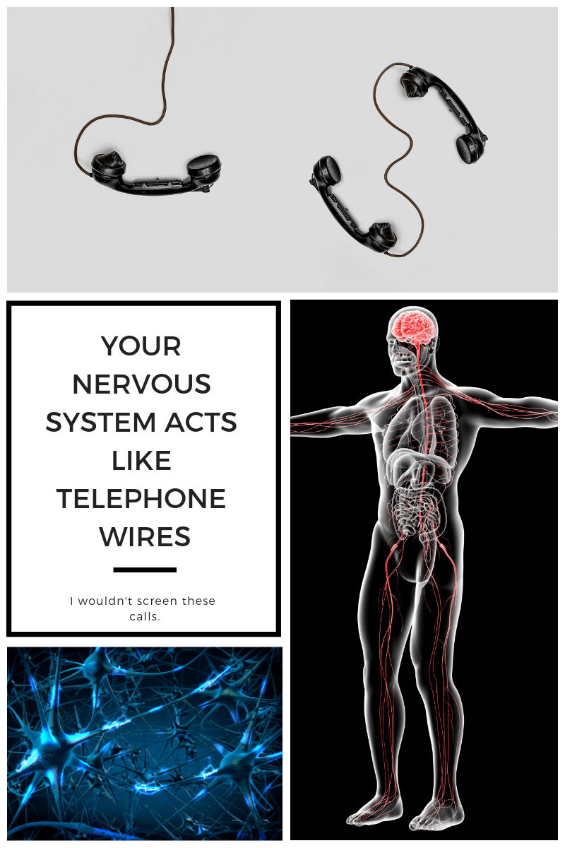 Your Nervous System acts like telephone wires (1).png