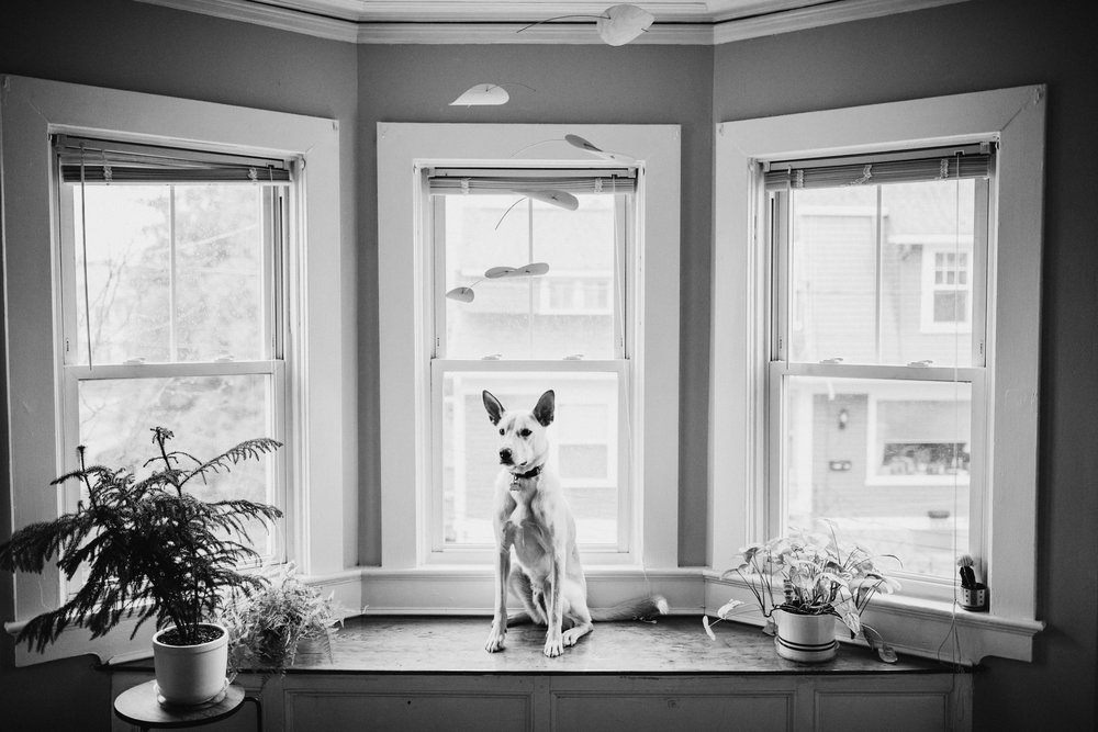 Providence-Rhode-Island-Puppy-Session-7.jpg