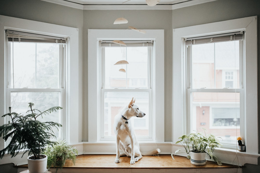 Providence-Rhode-Island-Puppy-Session-8.jpg