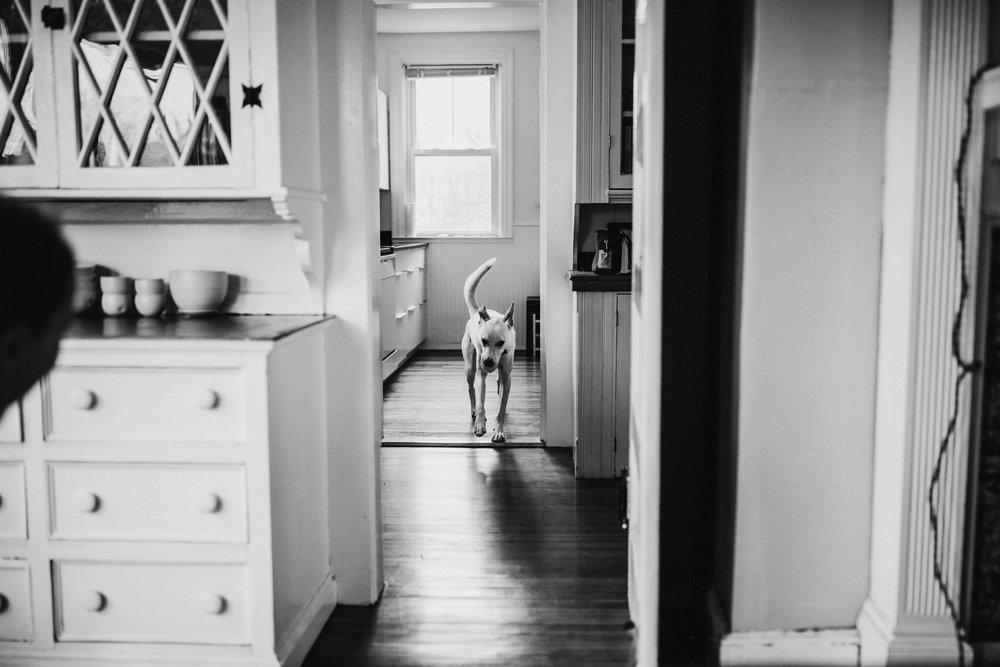Providence-Rhode-Island-Puppy-Session-10.jpg