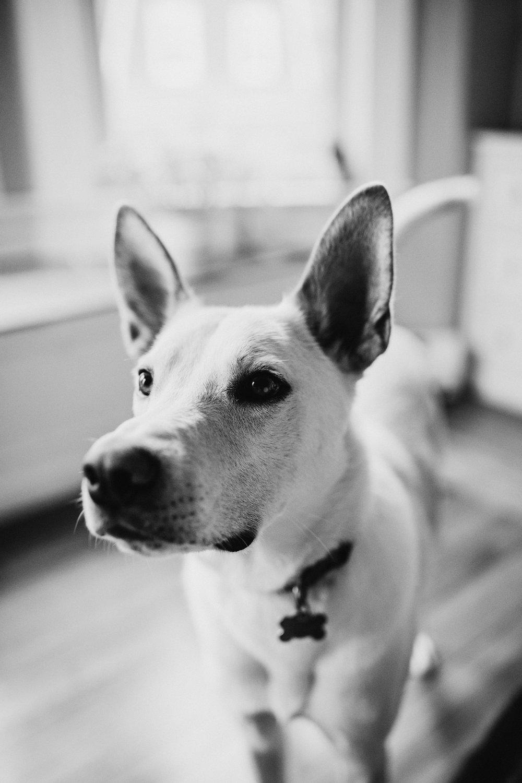 Providence-Rhode-Island-Puppy-Session-11.jpg