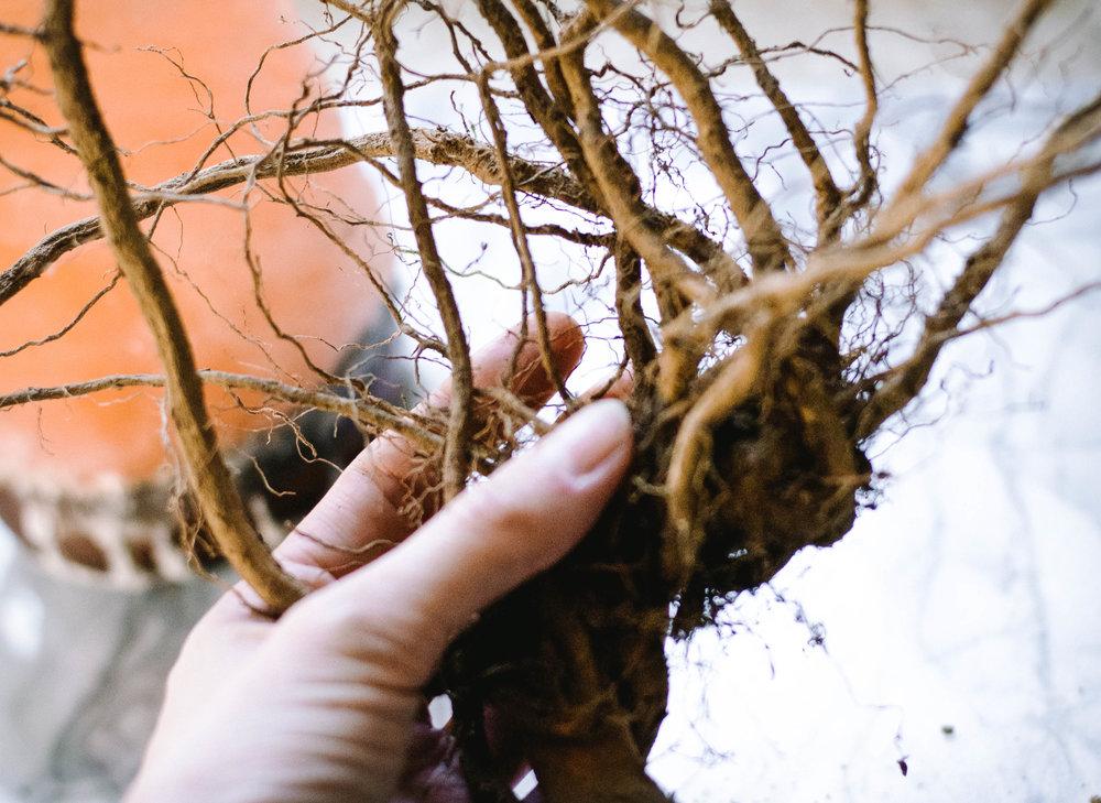 Ashwagandha root recipe