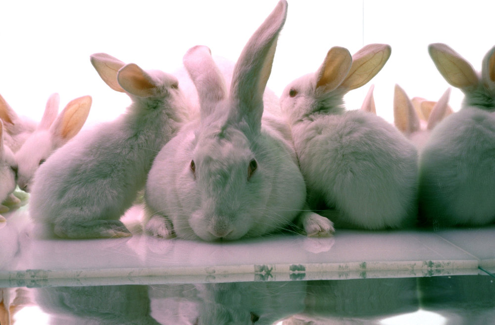 A rabbit population explosion results from positive feedback between the number of parents and babies.