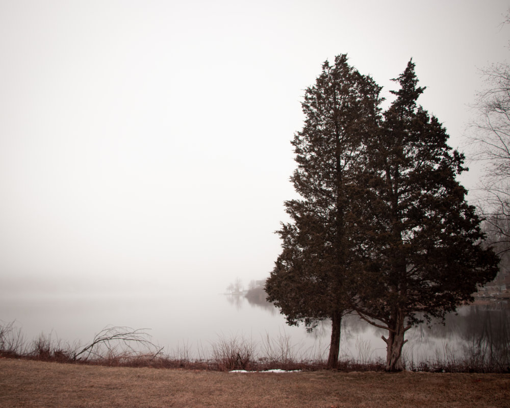 Two Trees & Fog (1 of 1).jpg