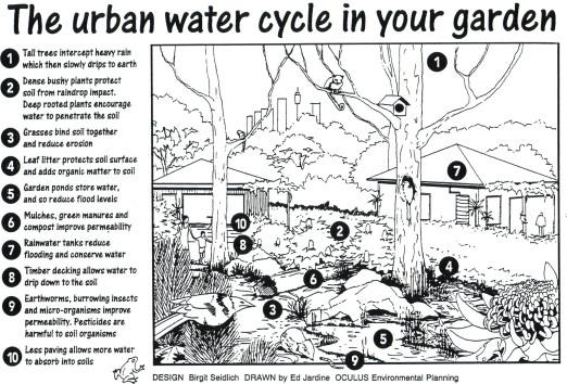 water-cycle-in-garden-1.jpg