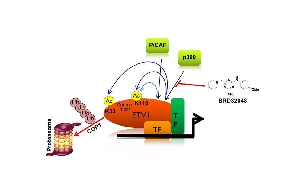 ETV1 BRD32048 model.jpg