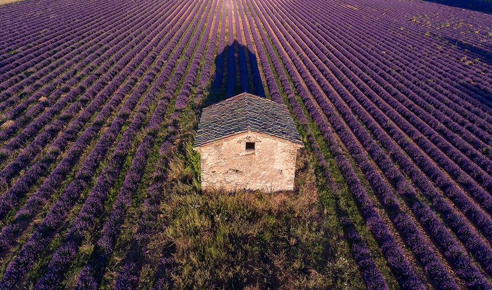 YL Simiane la Rontonde Lavender Farm.jpg