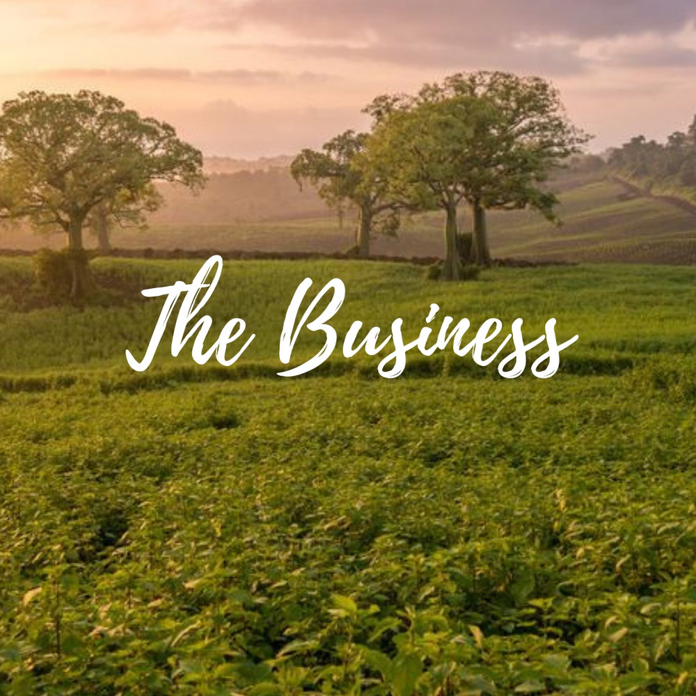 The Business.jpg