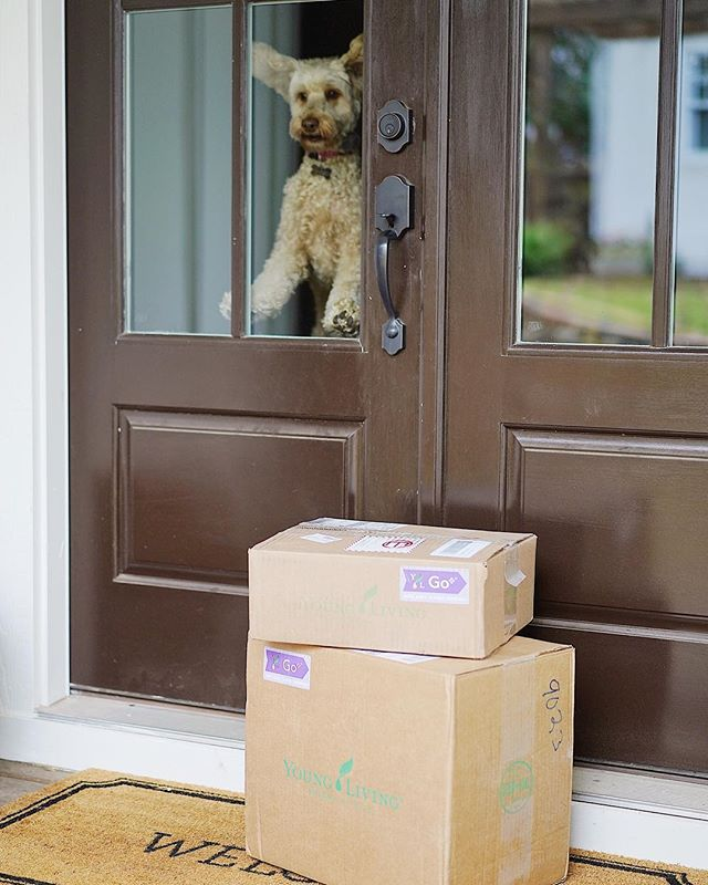 """Even Maggie can't contain her excitement when our Essential Rewards order shows up on our doorstep! 🐶 These are our """"monthly wellness boxes"""". We are slowly but surely changing out all of our everyday cleaning and personal care items out for all natural, plant-based items infused with pure essential oils. No more cancer causing chemicals & toxins coming through those doors if I can help it! 🌿 We feel so much better and have seen so many benefits with the changes in our lifestyle. So much empowerment in knowing and doing better for my family! 💗 I love that I can do all of my shopping through Young Living and they reward me for it! Right now we get 20% back on our orders and earn sooooo many monthly promos! Yay!! Seriously one of my favorite days of the month. 😁"""