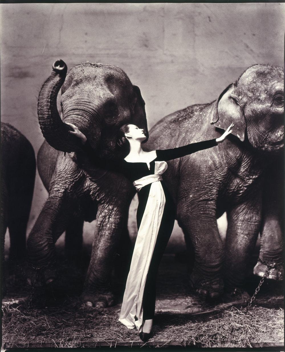 Dovima with Elephants, Evening Dress by Dior, Cirque d'Hiver, Paris, August 1955