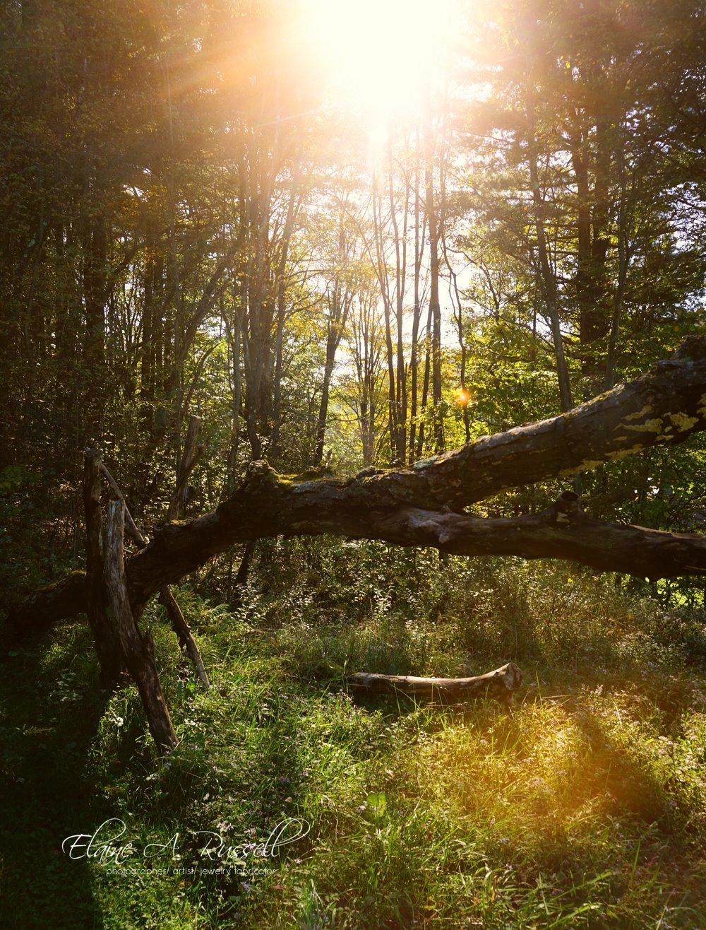 woods-signed.jpg
