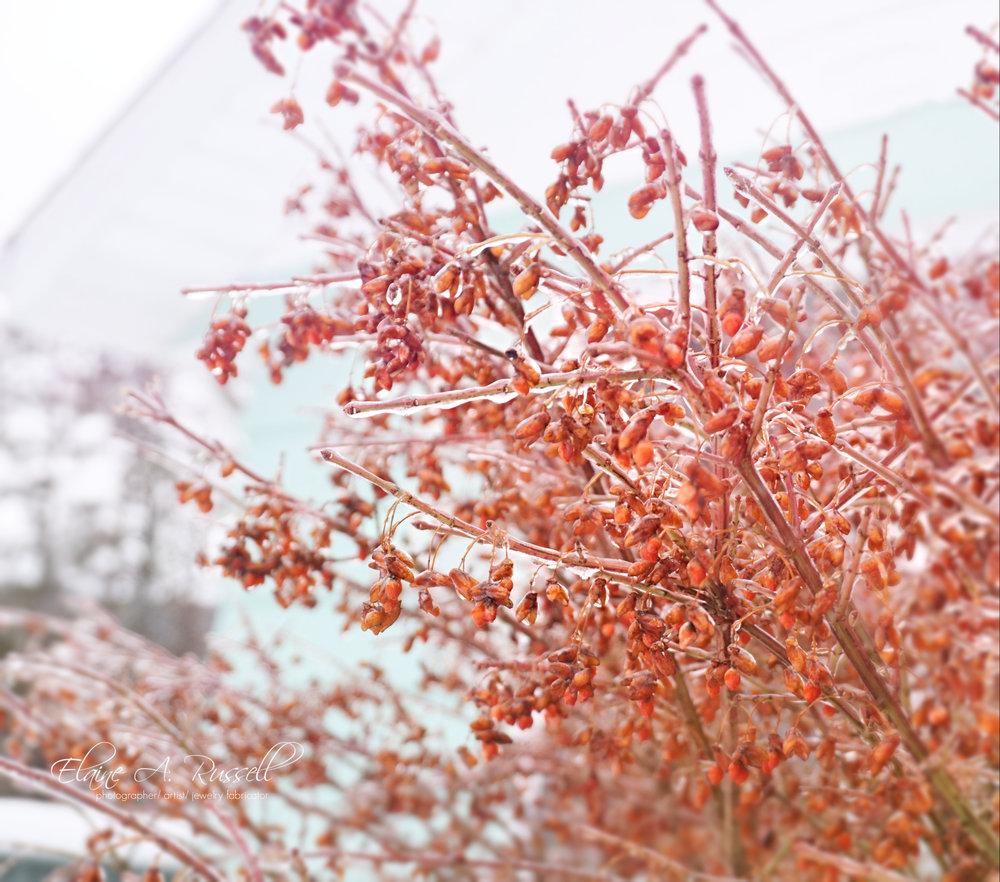 FrozenBush2.jpg