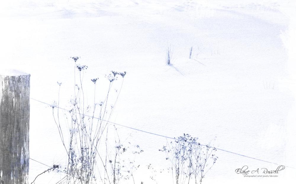 Cyanotype2.jpg