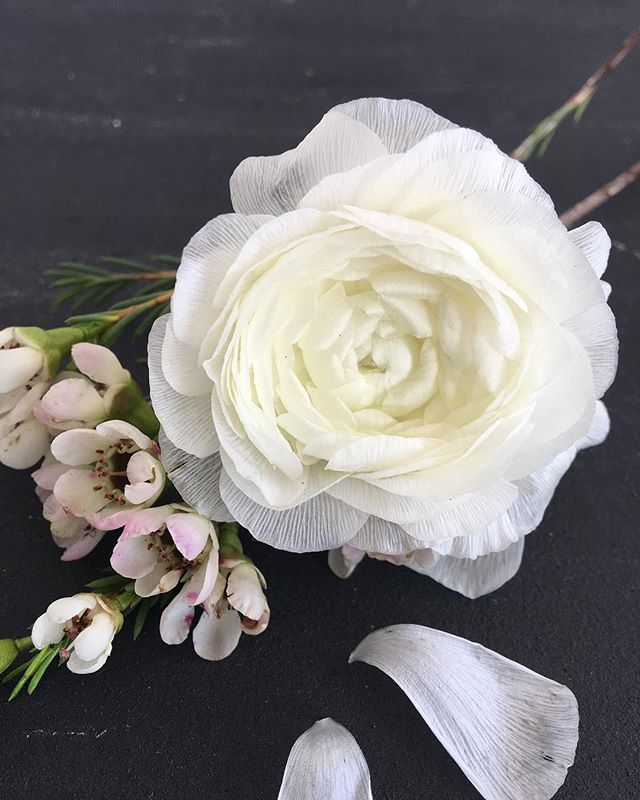 Wilting... how pretty are the petals of ranunculus flowers? Like a delicate lace. And just as people do, they gain a little more character and interest as they age.