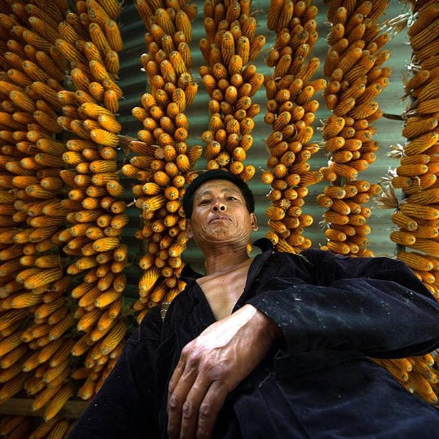 Corn drying for the #winter months in the northern provinces. It's time to prepare!  Contact us if you're interested in acquiring a Réhahn Limited Edition Fine Art Photography print.  #art #artwork #fineart #photograph #photoftheday #photography #fineartphotography #limitededition #artist #photographer #artgallery #gallery #creative #portrait #discover #travel #vietnam