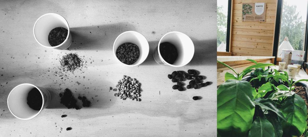 kaffefarm-1024x458.jpg