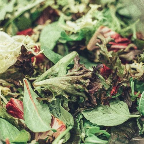 Detall 9 - De barreges d'enciams, n'hi ha de molts tipus. Per a la nostra hem escollit el bó i millor... hi trobareu radiccio, escarola frise, roure vermell, lollo rosso i brots de plantes joves. Notareu la diferència!
