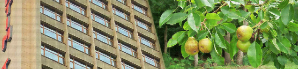 banner-home2.jpg