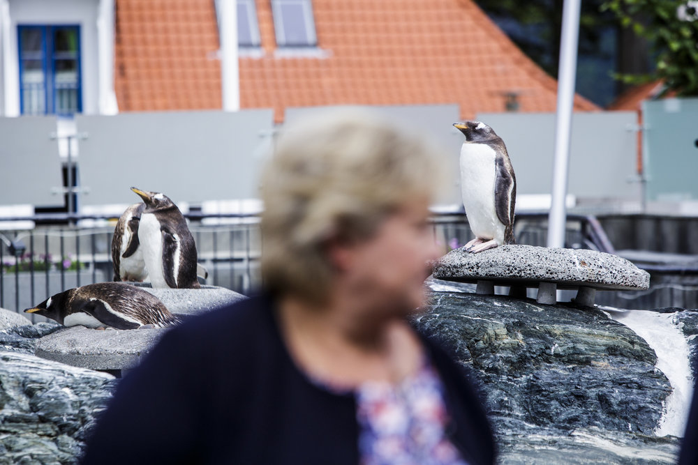 At the city aquarium prime minister Solberg meets primepenguin Erna. It's followed by a show with a funny sea lion and applause. The aquarium is important.
