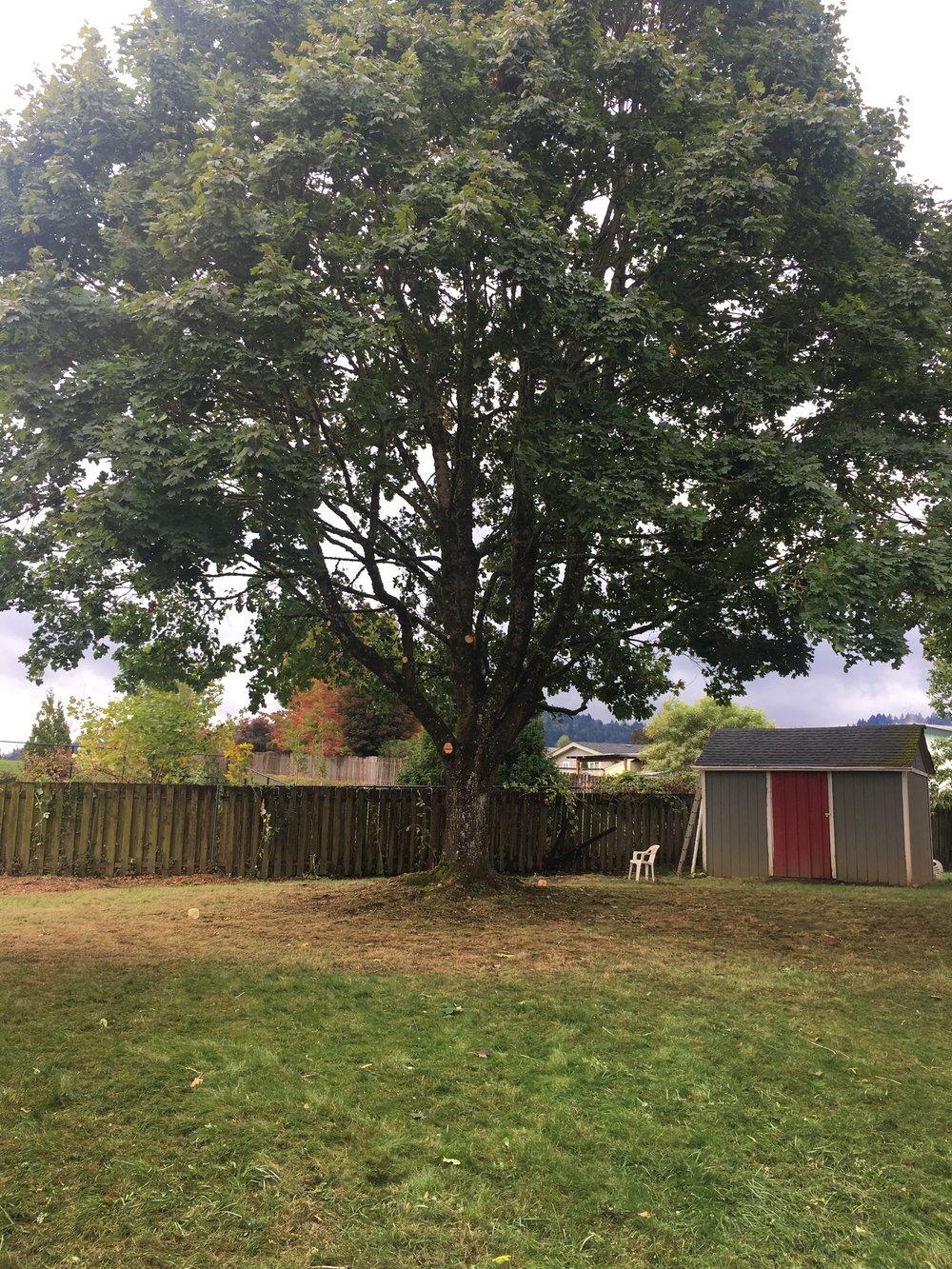 formal tree pruning