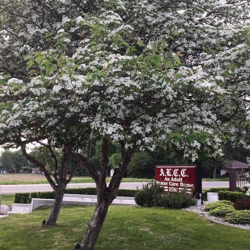 Springtime at ALCC.