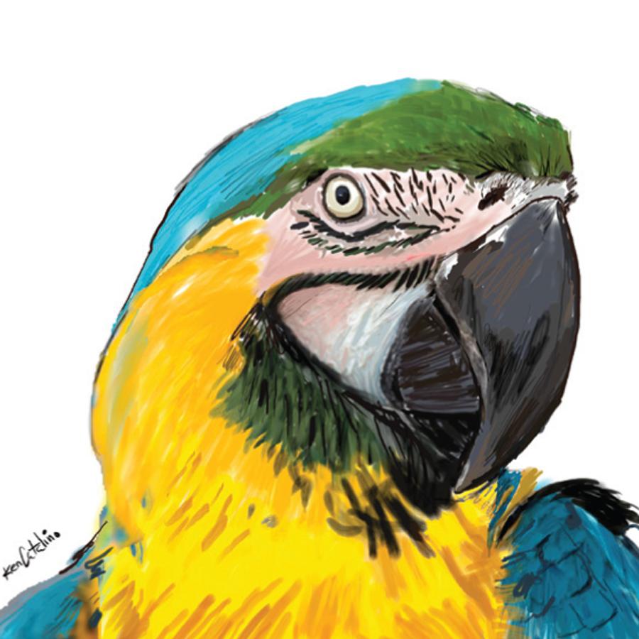 ParrotWeb.jpg