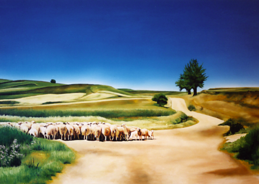 Sheep Gathered, Plains of Leon