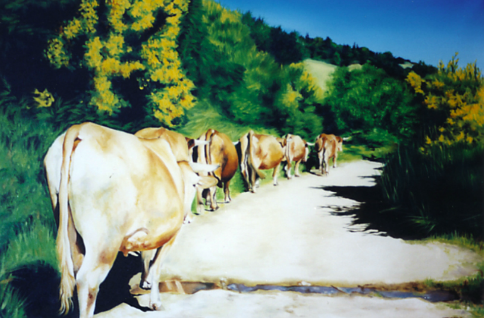 Cows on Path Through Gallcia