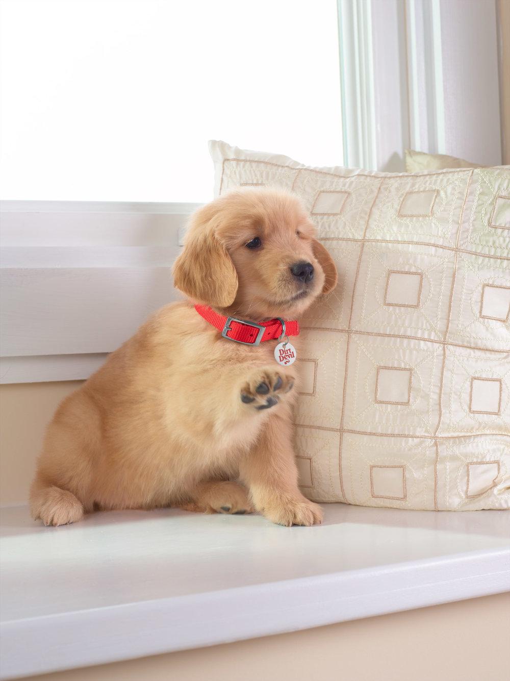 Puppies!_021.jpg