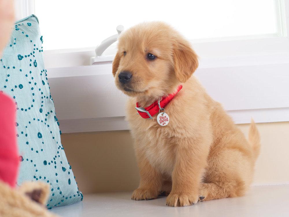 Puppies!_032.jpg