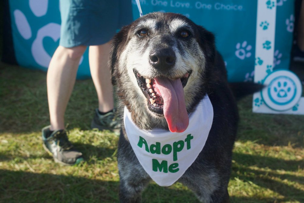 Adopt - At TLC, our adoption process is simple and straight-forward. We want you to find a new family member and we want our rescues to find their forever home.